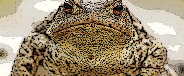 Toad Doctors: In England in the 1700 and 1800s - Geri Walton